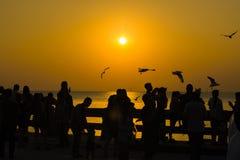 Люди и птица силуэта летают в заход солнца seascape неба естественный Стоковое Изображение RF