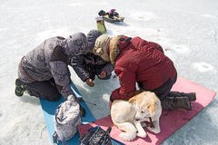 Люди и собака на зиме морозят рыбную ловлю на Lake Baikal Стоковые Фото