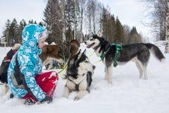 Люди и собаки во время торжества конца имени зимы Стоковое Изображение RF