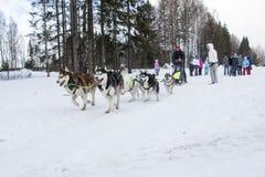 Люди и собаки во время торжества конца имени зимы Стоковые Изображения