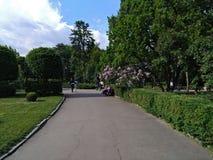Люди идут в ботанический сад и делают фото редких заводов стоковые фотографии rf