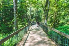 Люди идут на деревянный мост в лесе ботанического сада в сезоне лета Стоковые Изображения RF