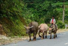 Люди идя на сельскую дорогу в Вьетнаме Стоковые Изображения
