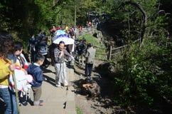 Люди наблюдая обезьяну Стоковые Фотографии RF