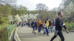 Люди наслаждаются цветениями магнолии весны в ботаническом саде в Kyiv видеоматериал