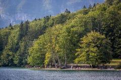 Люди наслаждаясь летом на озере пляжа в Словении Стоковые Фотографии RF