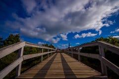 Люди наслаждаясь красивым видом от верхней части в горе в острове wlaking в деревянных путях, Новой Зеландии Rangitoto внутри Стоковые Изображения