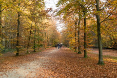 Люди наслаждаясь осенью, Нидерландами Стоковое Фото