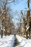 Люди наслаждаясь солнечным зимним днем следовать сильным штормом снега в городском городе Бухареста Стоковые Фото