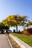 Люди около дерева Стоковая Фотография