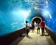 Люди осматривая Fishs плавают в аквариуме Стоковое Изображение RF
