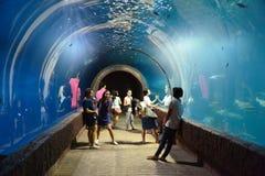 Люди осматривая Fishs плавают в аквариуме Стоковые Фото