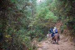 Люди путешествуя к Taktshang Goemba лошадью Стоковая Фотография
