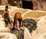 Люди работая в известной дубильне, Марокко Стоковые Фотографии RF