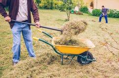 Люди работая крепко сгребающ сухое сено на поле Стоковое Фото