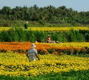 Люди работая на плантации цветка в Dong Thap, Вьетнаме Стоковая Фотография