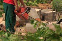 Люди режа деревья Стоковое Фото