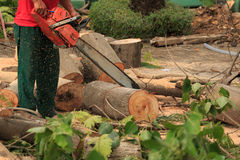 Люди режа деревья Стоковые Фотографии RF
