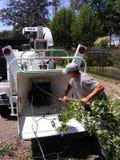 Люди укомплектовывают личным составом Shredding ветви дерева Стоковая Фотография RF