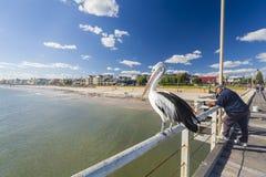 Люди удя на Henley приставают молу к берегу, Аделаиду, Стоковые Фотографии RF