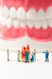 Люди для того чтобы очистить модель зуба на белой предпосылке Стоковые Фотографии RF