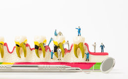 Люди для того чтобы очистить модель зуба на белой предпосылке Стоковая Фотография