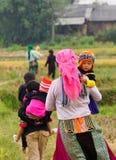 Люди Hmong работая на поле риса Стоковое Изображение RF