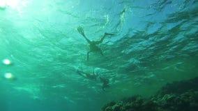 Люди Snorkeling под водой в Красном Море, Египте акции видеоматериалы
