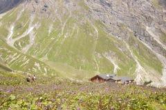 Люди wading через цветки к хате горы Стоковое фото RF
