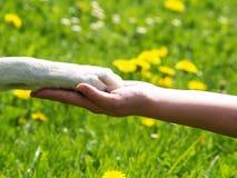 Лапка в руке (3) стоковая фотография rf