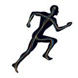 людская слабонервная система Стоковые Изображения RF