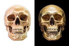 Людской изолированный череп стоковая фотография rf