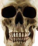 людской череп Стоковая Фотография