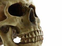 людской череп Стоковые Фото