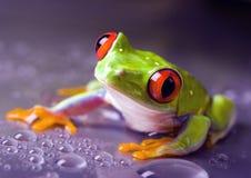 лягушка влажная Стоковое Изображение