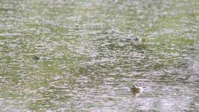 Лягушка в воде акции видеоматериалы
