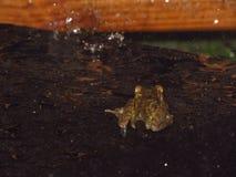 Лягушка в дожде стоковые изображения rf
