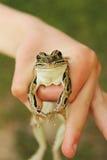 Лягушка в руке Стоковые Изображения