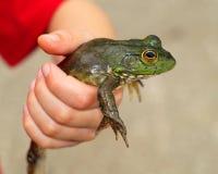 Лягушка в руке Стоковое фото RF