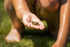 Лягушка в руке стоковая фотография rf
