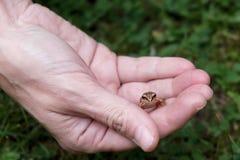 Лягушка в руке Стоковая Фотография