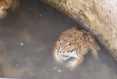 Лягушка в рыбном пруде стоковое фото