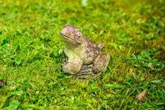 Лягушка в саде за домом стоковые изображения