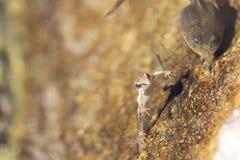 Лягушка горы маленькая стоковое фото