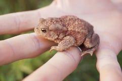 Лягушка или жаба в наличии! Чудесный летний день стоковые фото