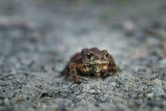 Лягушка лист в песке стоковая фотография rf