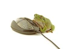лягушка компьютера Стоковая Фотография