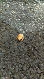 лягушка малюсенькая Стоковые Фото