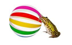 Лягушка нажимая большое beachball Стоковая Фотография