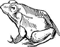 Лягушка нарисованная рукой Стоковые Фотографии RF